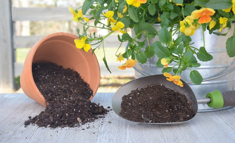 What Can You Do To Use Less Potting Soil in a Large Plant Pot?