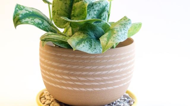 Why Do You Need To Clean Plant Pots?